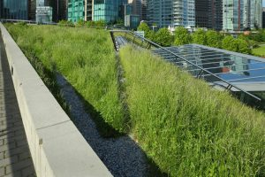 Green Roof – McDonald and Wetle